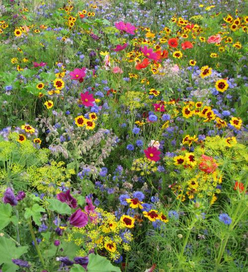 Pollinator Meadow