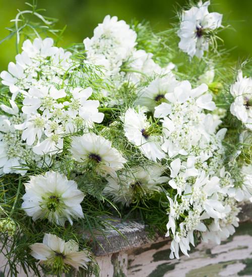 Mont Blanc Cut Flowers Collection