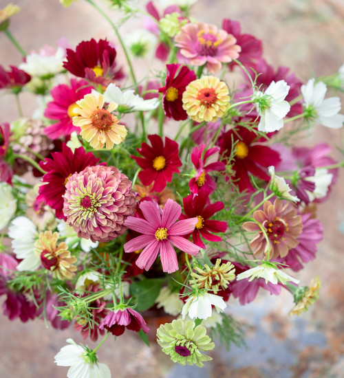Bestseller Cosmos and Zinnia Collection