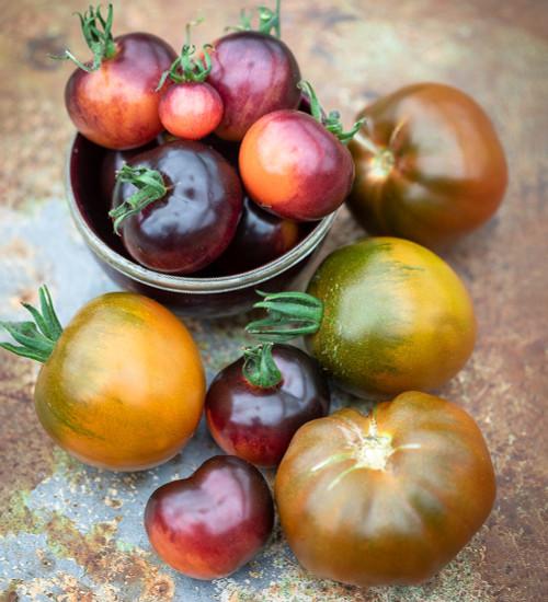 Tomato 'Indigo Rose' and 'Noire de Crimèe' Collection