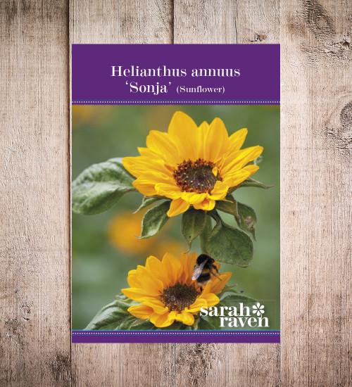 Helianthus annuus 'Sonja'