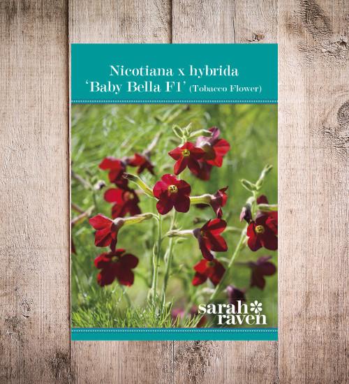 Nicotiana x sanderae 'Babybella' F1