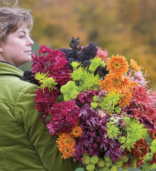 Abundant Chrysanthemum Collection