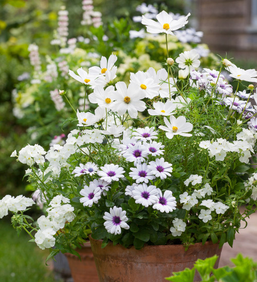 White Pot Collection