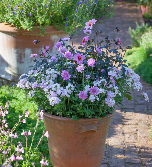 Butterfly Pink Pot Collection