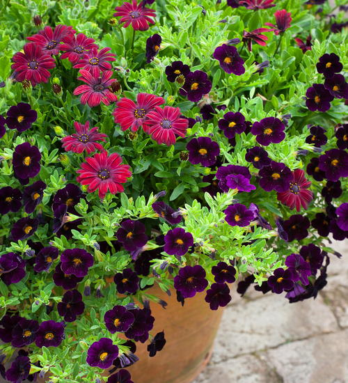 Chenille Pot Collection