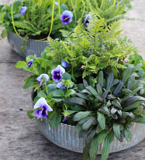 Evergreen Compact Container Collection