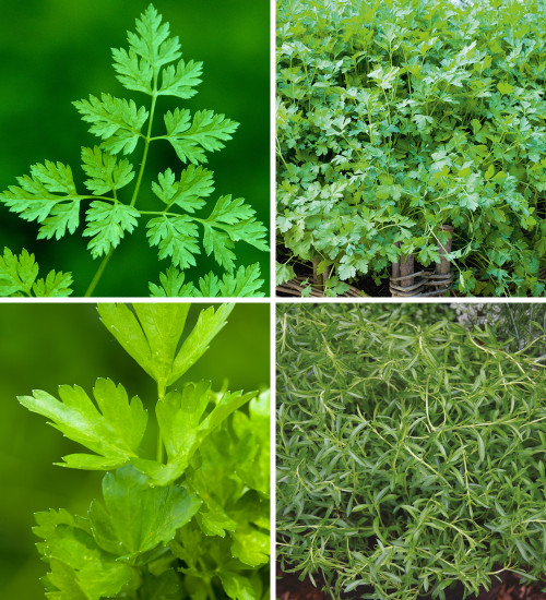 Herbs from Autumn until Spring Collection