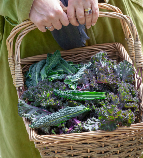 Winter Kale Collection