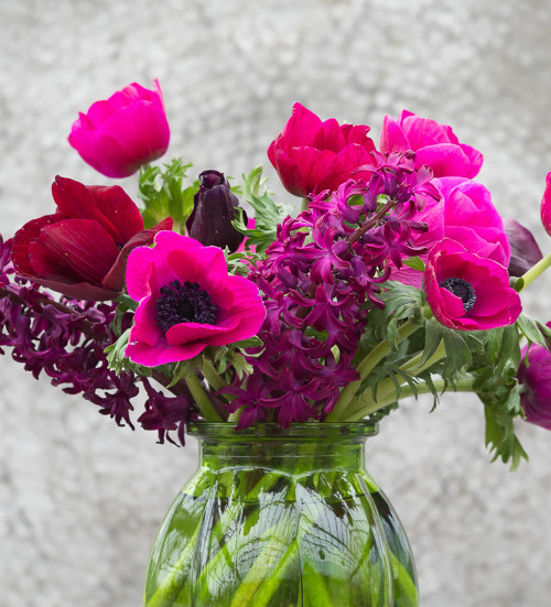 Anemone coronaria 'Jerusalem Pink'