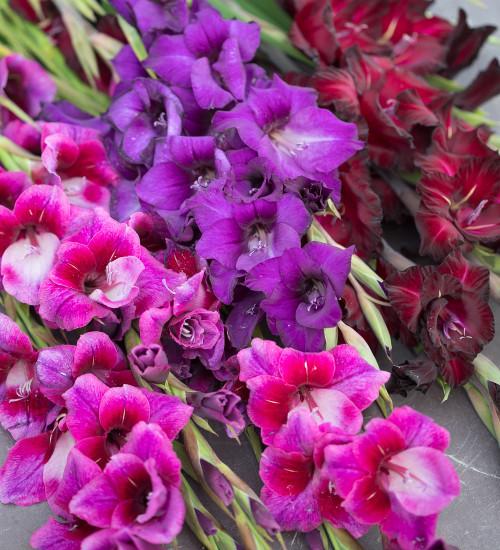 Pure Silk Gladioli Collection