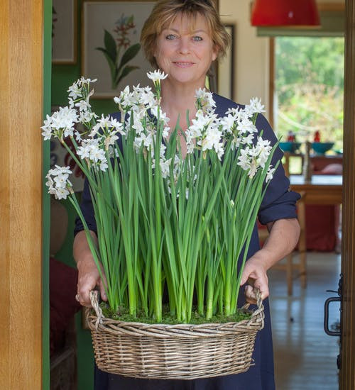 Potted Paperwhites in Willow Basket Gift Set