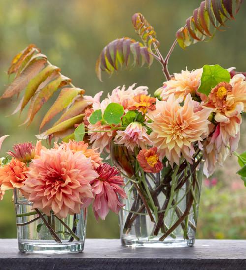 Autumn Colours Dahlia Collection