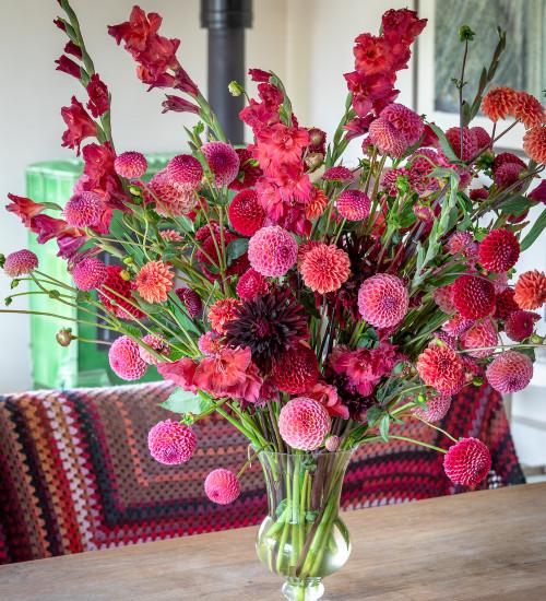 Coral and Crimson Dahlia Collection