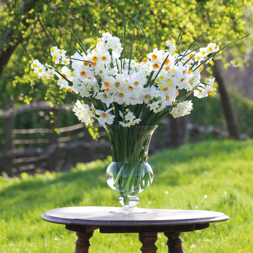Highly Scented Narcissus Collection
