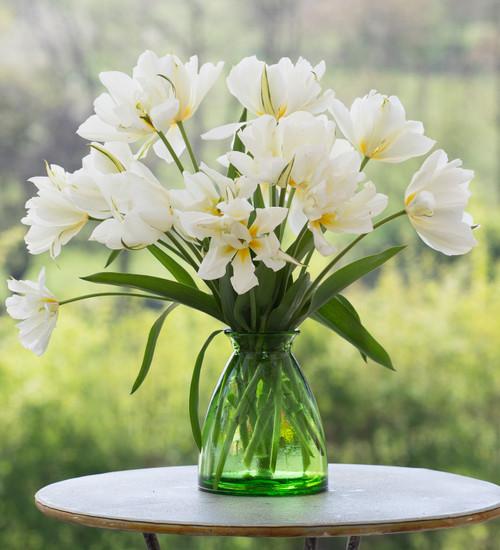 Tulip 'White Valley'