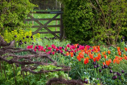 The Perch Hill Tulip Mix