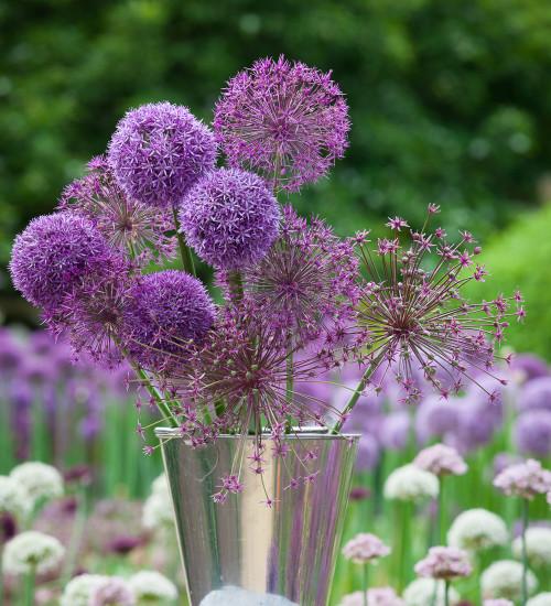 Parham Allium Collection