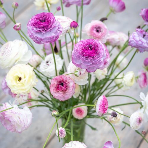 Ranunculus Collection