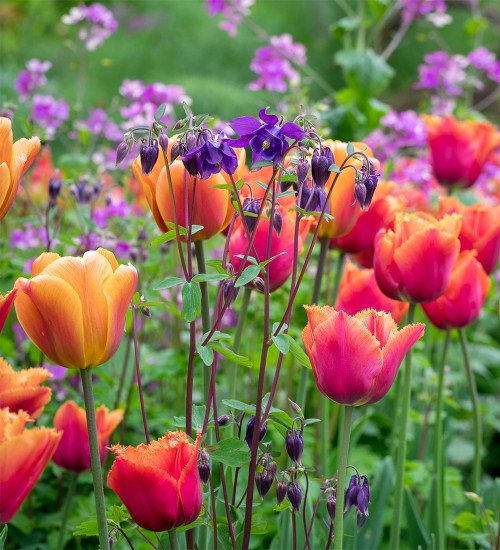 The Oast Garden Tulip Collection