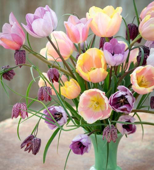 Cottage Garden Tulip Collection