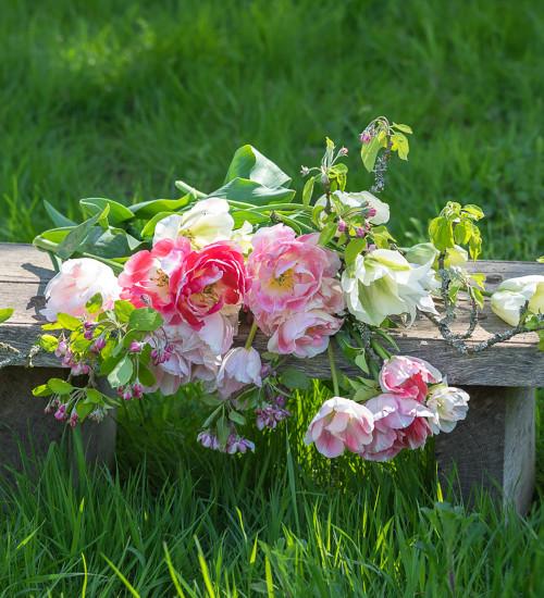 Apple Blossom Tulip Collection