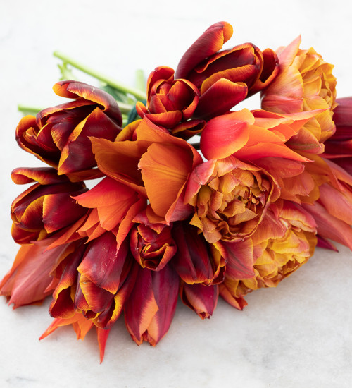 Crushed Velvet Tulip Collection