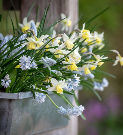 The Spring Window Box Collection