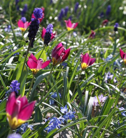 Spring Jewels Drift Mix