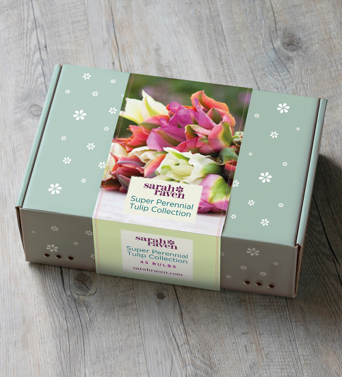 Super Perennial Tulip Collection in a Gift Box (45 bulbs)