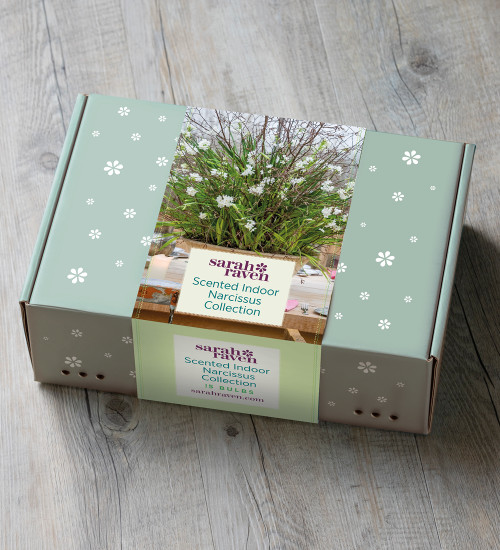 Scented Indoor Narcissus Collection in a Gift Box (15 bulbs)