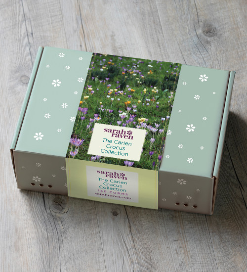 The Carien Crocus Collection in a Gift Box (150 corms)