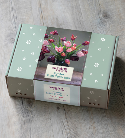 Pewter Tulip Collection in a Gift Box (20 bulbs)
