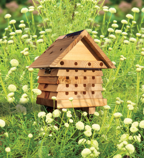 Solitary Beehive