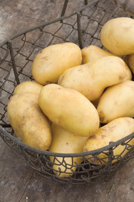"""马铃薯""""尼古拉"""""""