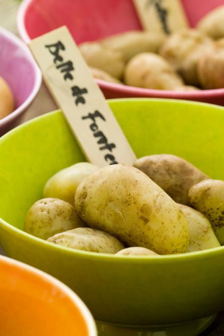 莎拉最喜欢的早中期土豆系列
