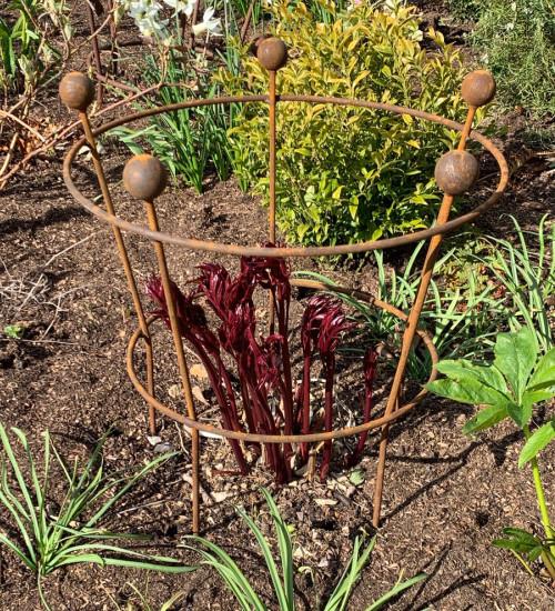 Peony Plant Support
