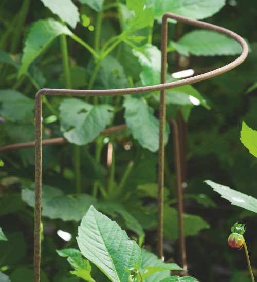 Herbaceous Supports