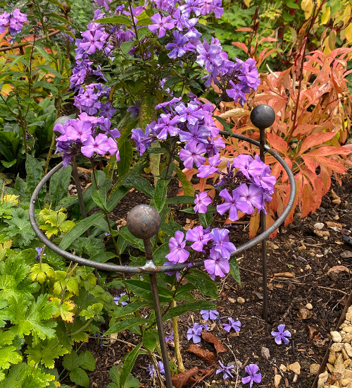 Circular Herbaceous Plant Support