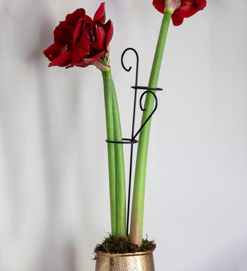 Decorative Amaryllis Support