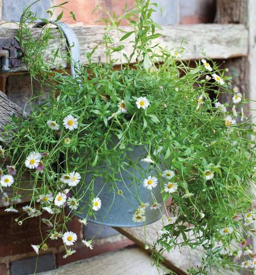 Zinc Balcony Pots