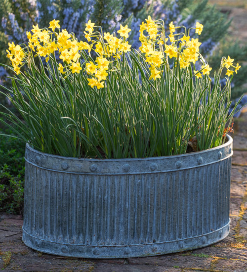 Ribbed Oval Zinc Planters
