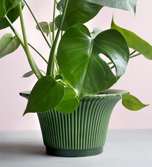 Green Daisy Pot
