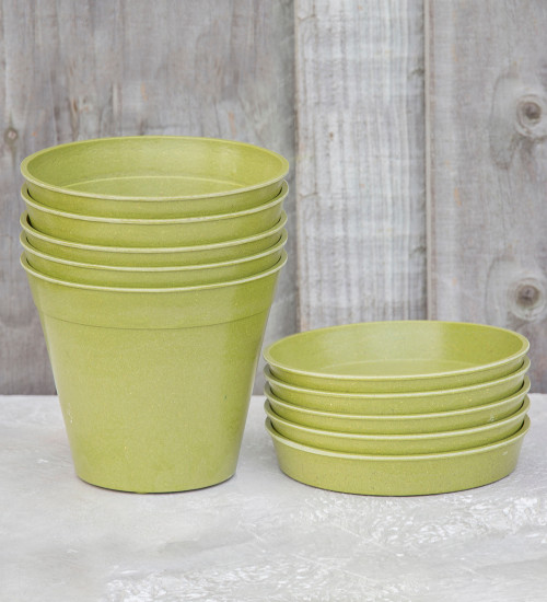 Bamboo Pots and Saucers