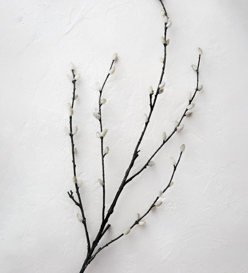 Dark Pussy Willow Branch