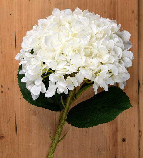 Oversized White Hydrangeas