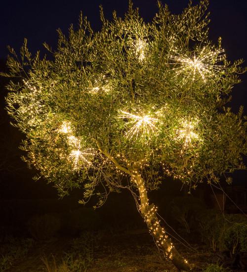 Battery Allium Light