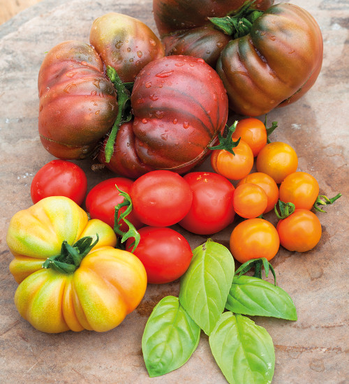 Tomato and Basil Plant Collection