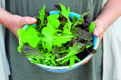 Sarah Raven Salad Collection
