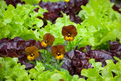 Salad Bowl Collection